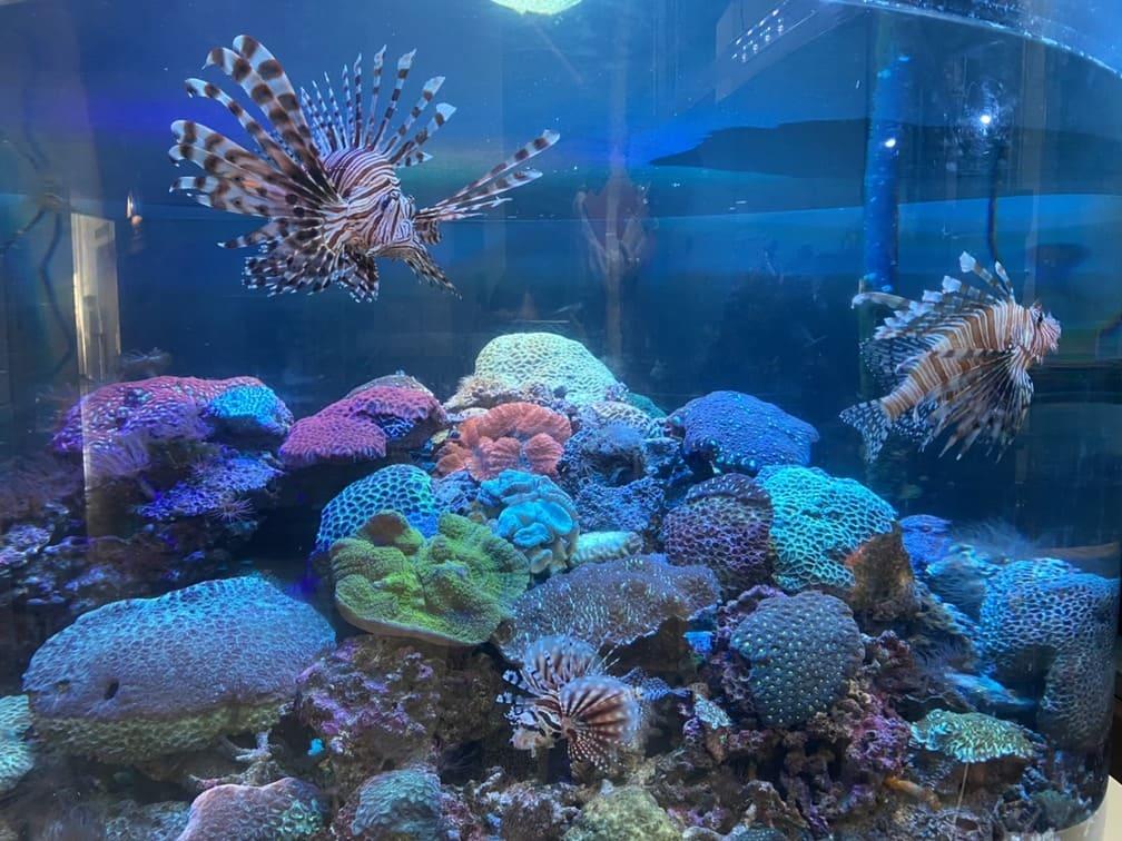 写真:海洋自然博物館マリンジャム